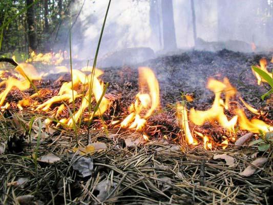 Тушить лес - теперь может каждый